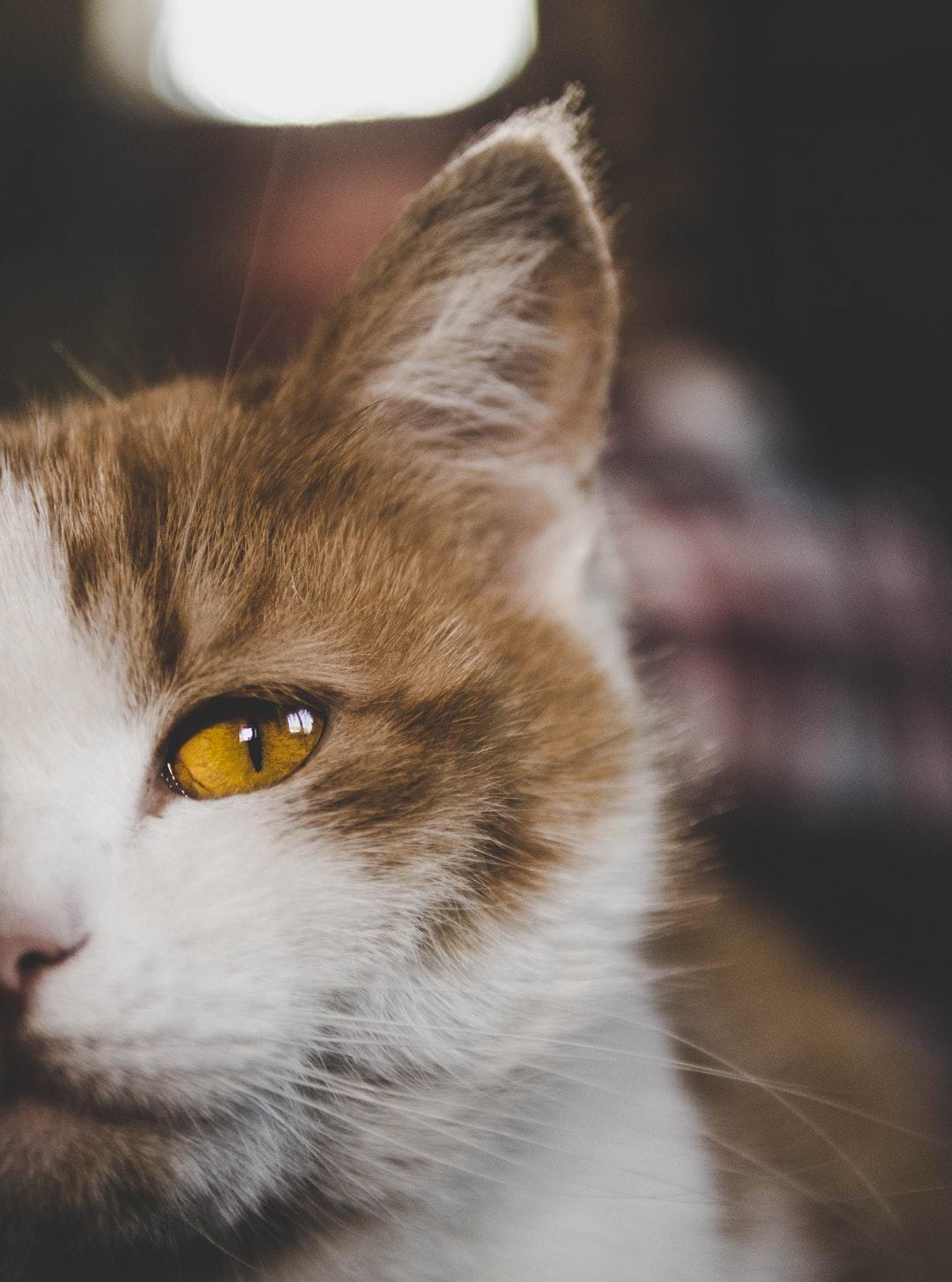 emotional support animal letter in Bogota