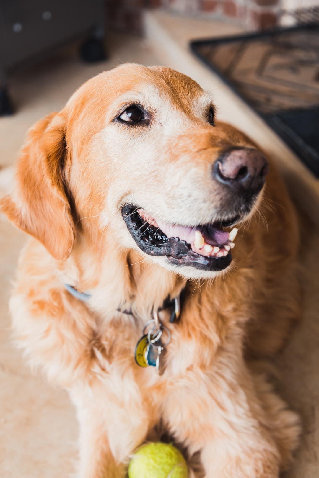 emotional support animal letter in Cambridge