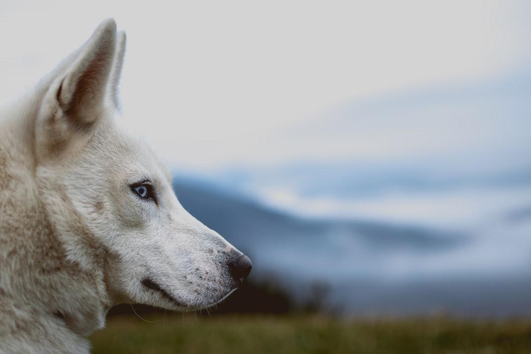 emotional support animal letter in Boulder
