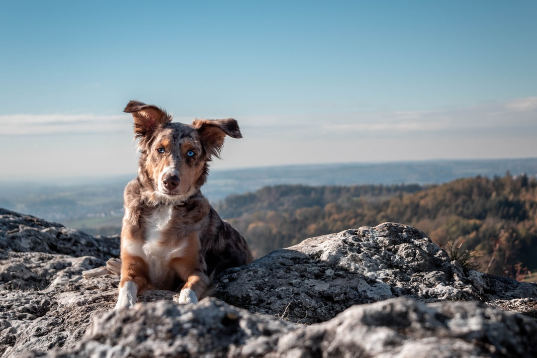 emotional support animal letter in Aberdeen