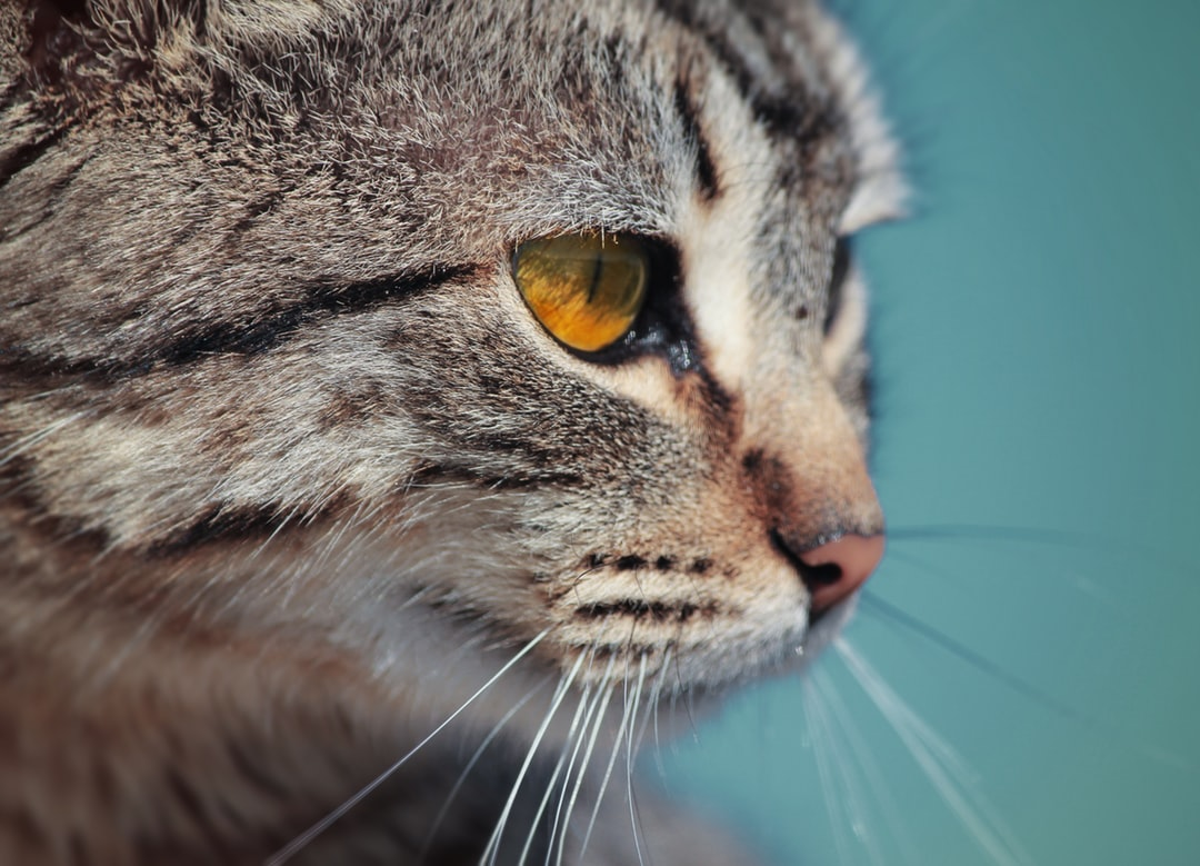 emotional support animal letter in Westerville