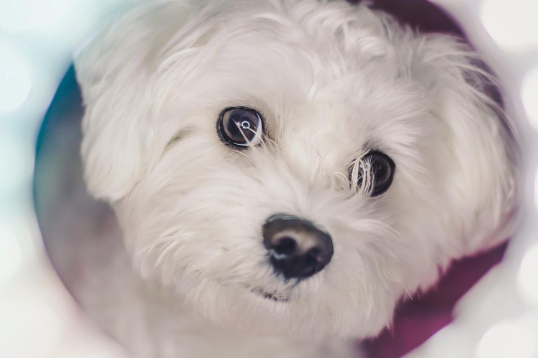 emotional support animal letter in Canfield