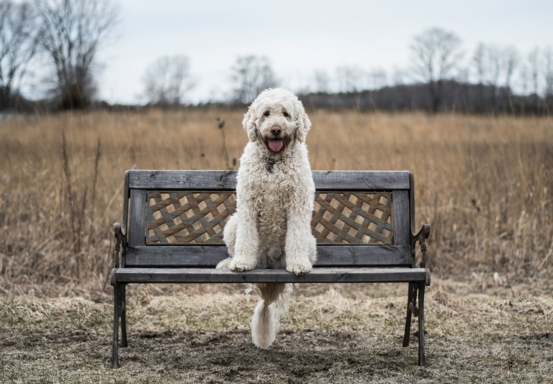 emotional support animal letter in Willowick
