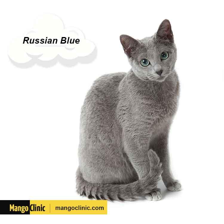 Best Cats Breeds ESA