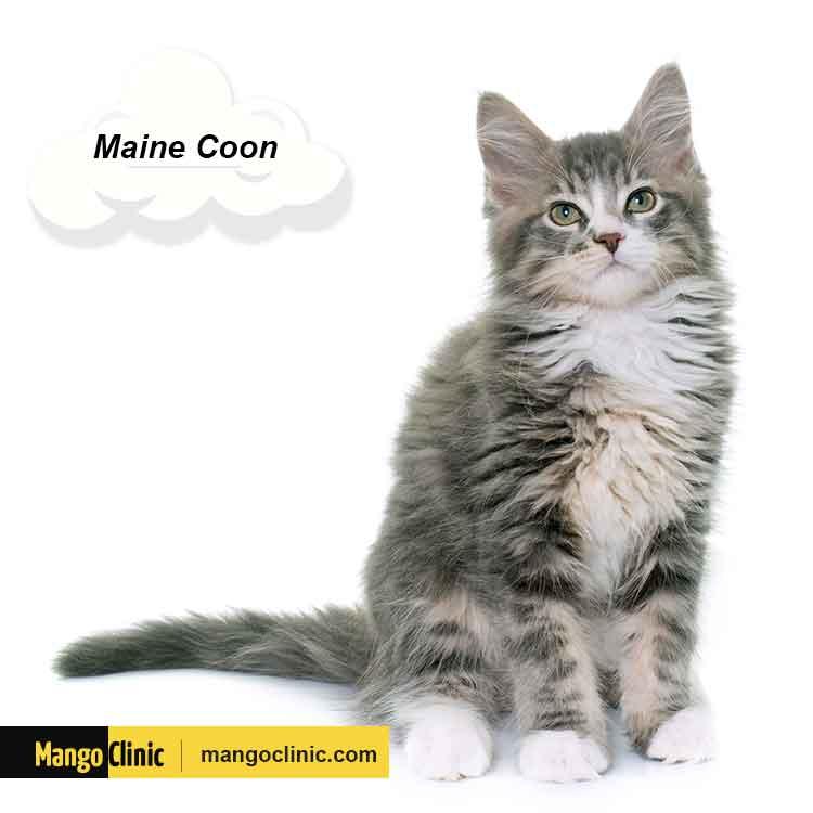 Best cats breeds