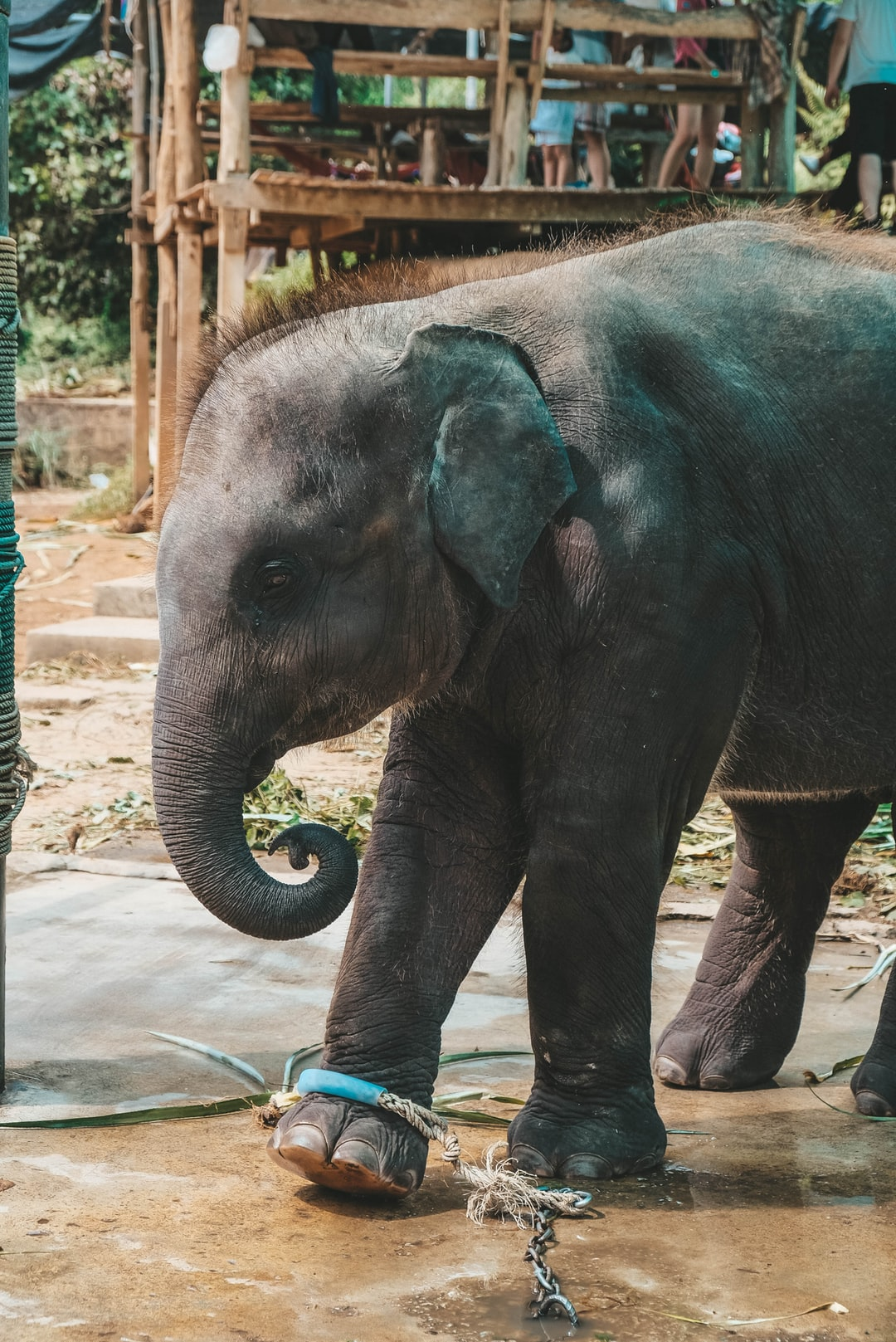 emotional support animal letter in Astoria