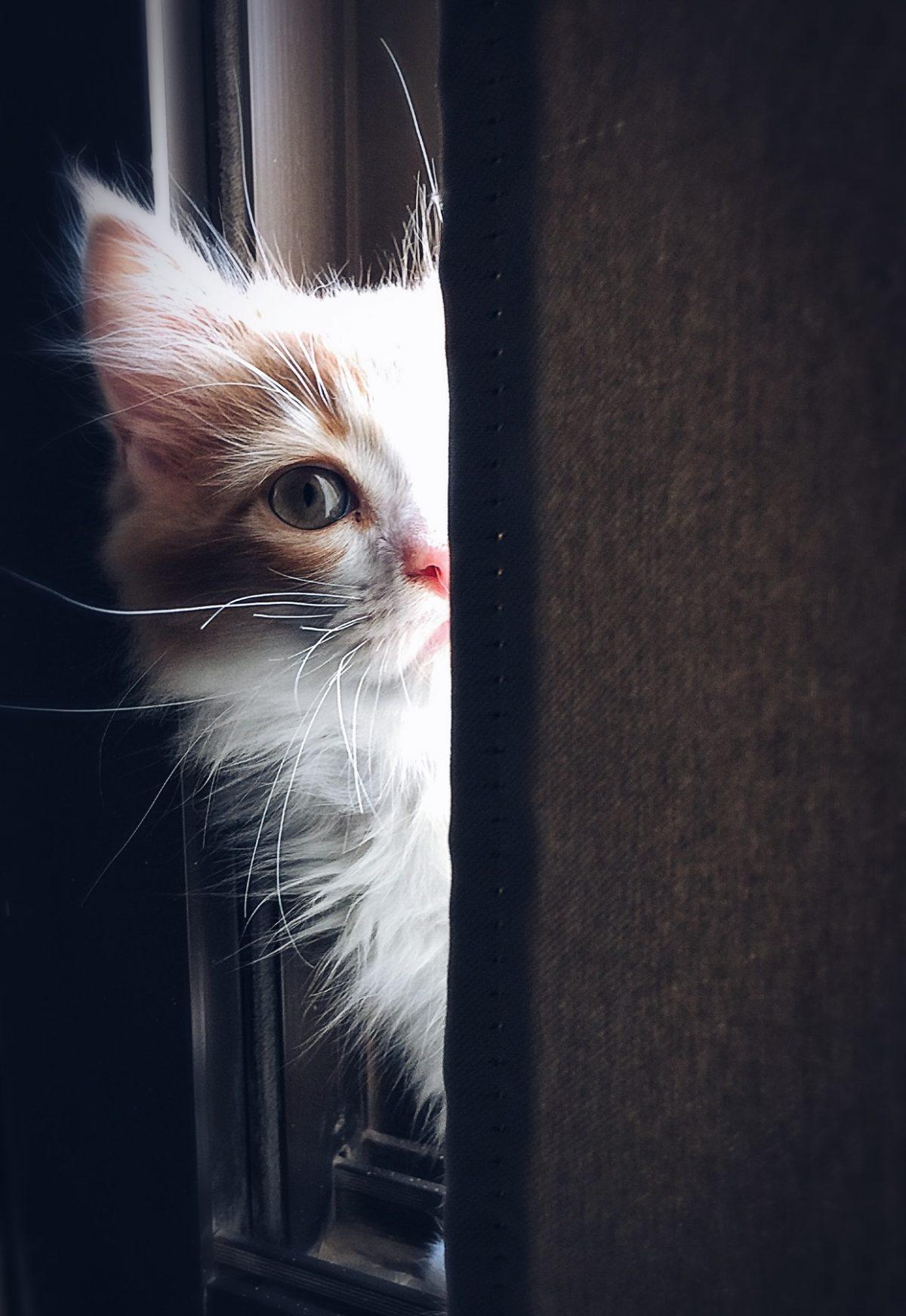 emotional support animal letter in Albemarle