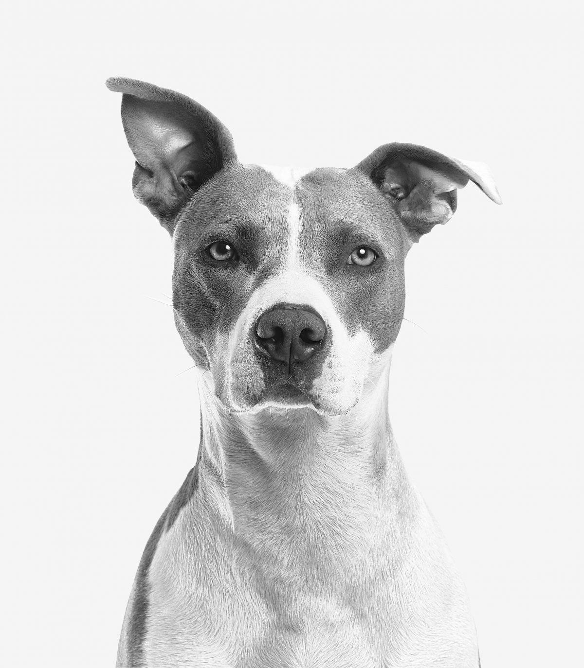 emotional support animal letter in Asheboro