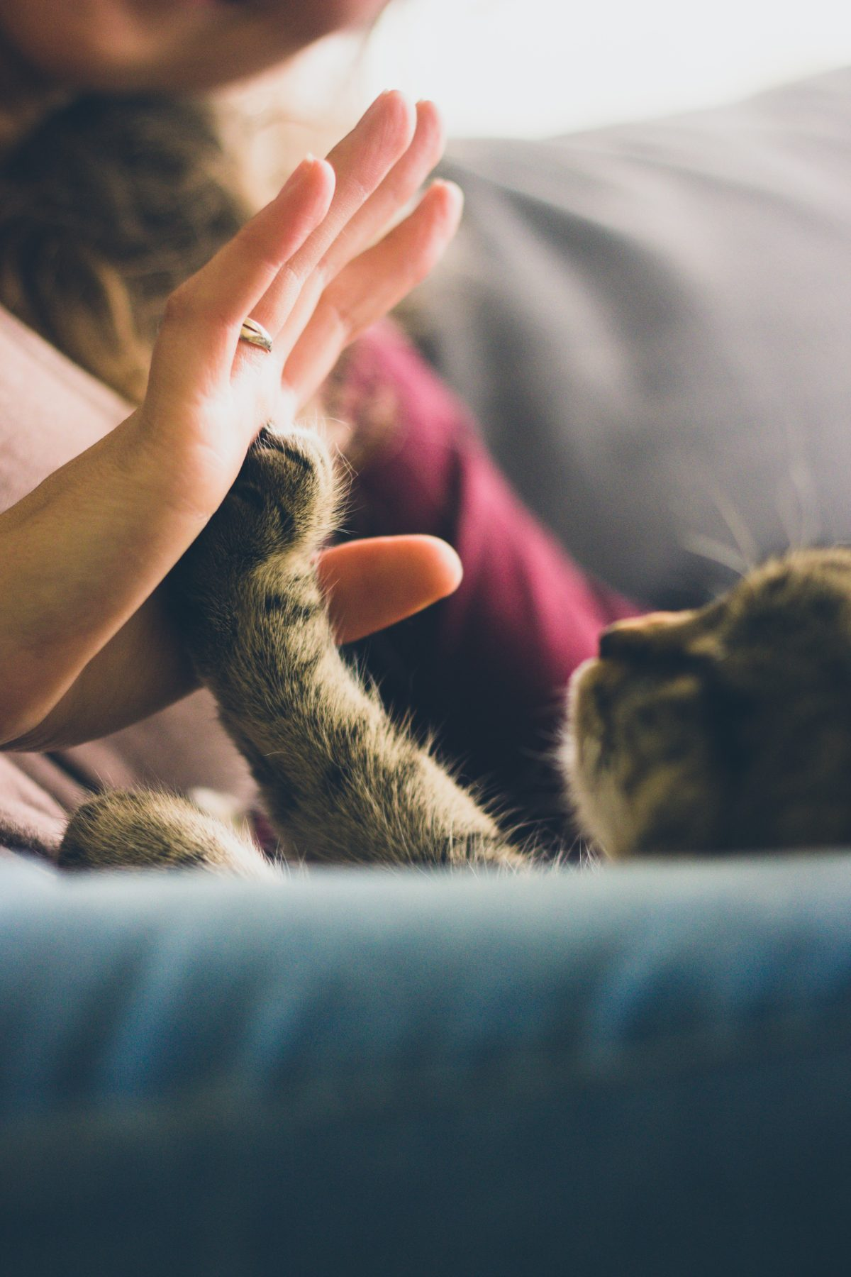emotional support animal letter in Anadarko
