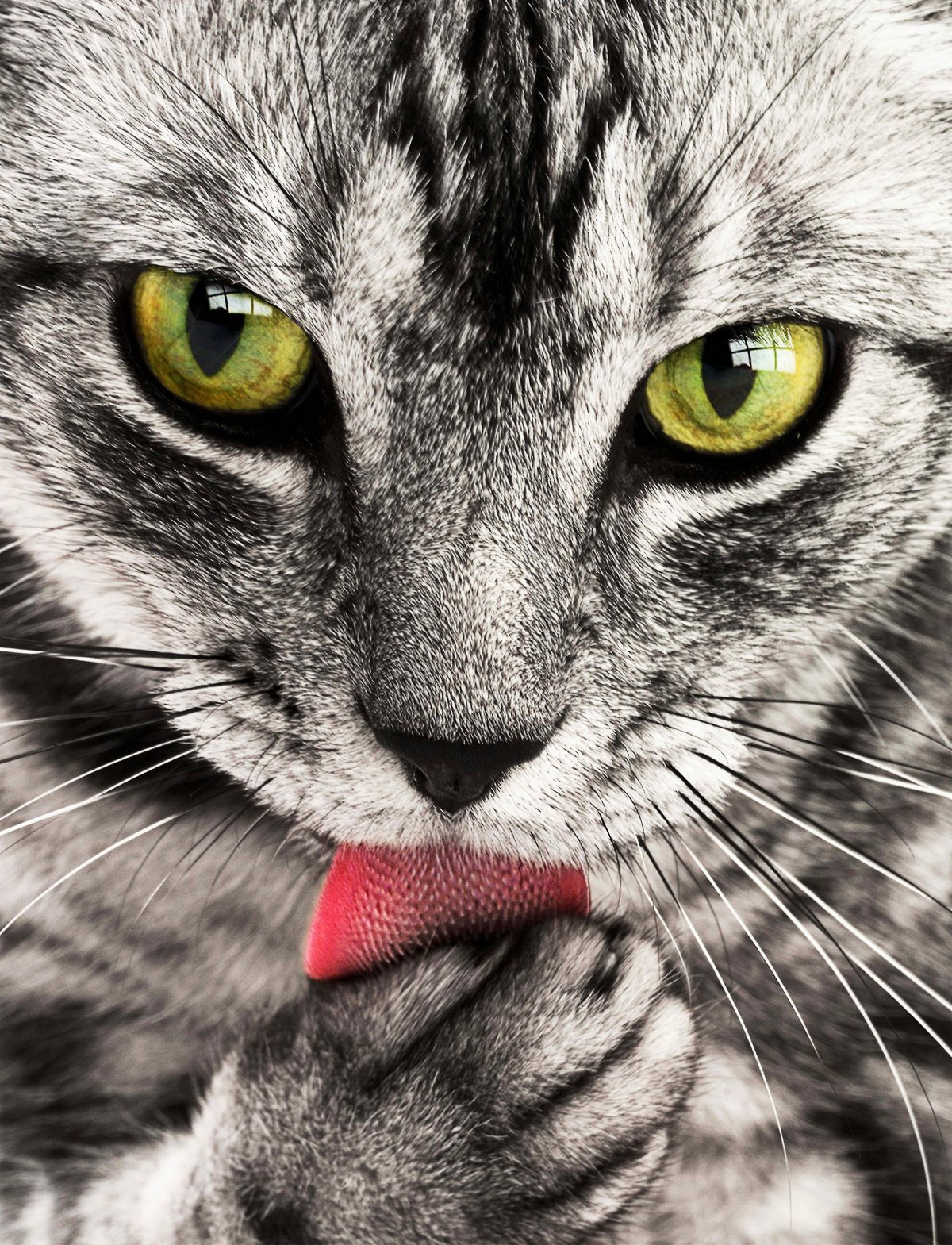 emotional support animal letter in Burnsville