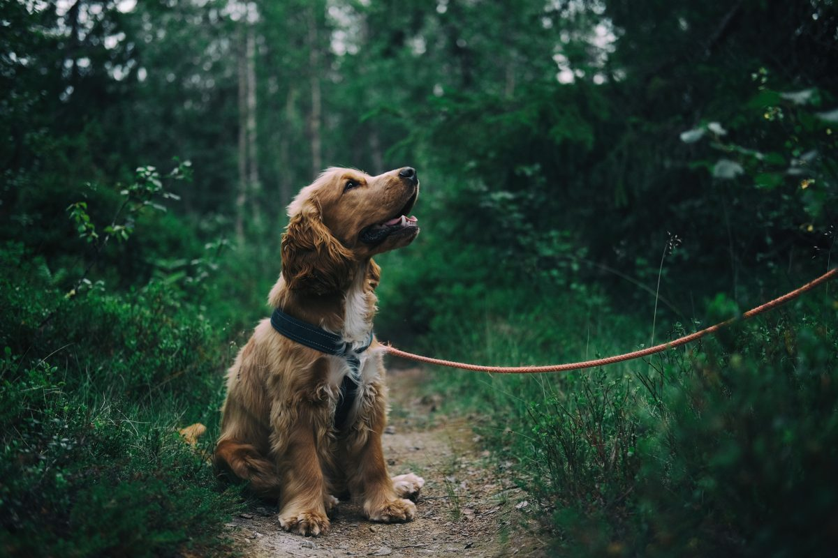 emotional support animal letter in Wisconsin Rapids
