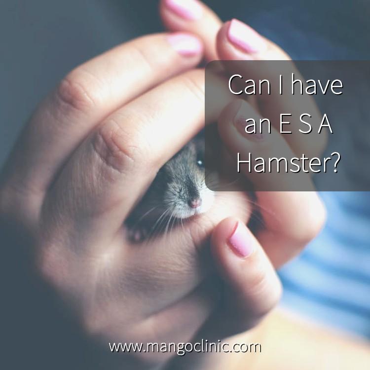 Emotional-Support-Animal-Hamster.jpg
