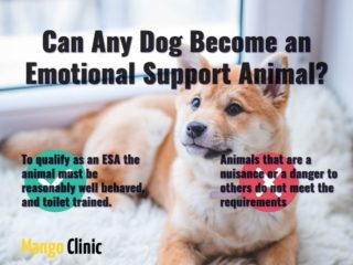 Emotional Support Dog Mango Clinic
