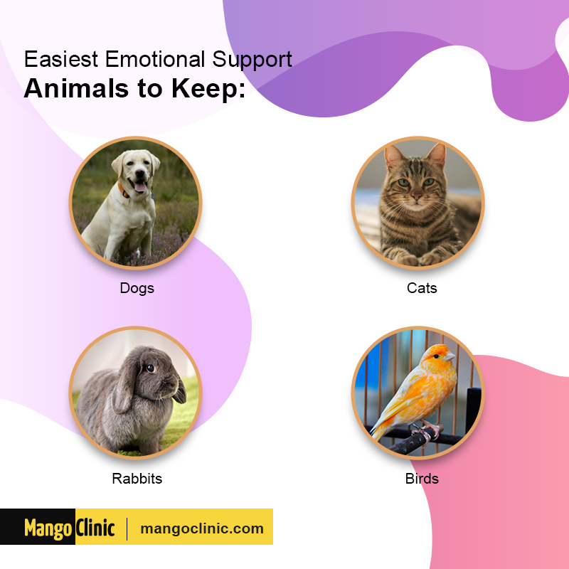 Emotion support animals
